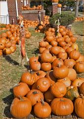 'Pumpkin Sale' -- Forest United Methodist Church Arlington (DC) October 2016 DSC_0106