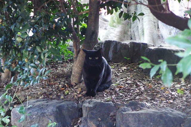 Today's Cat@2016-10-15