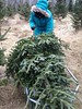 Getting our Christmas tree for the 2014 holidays