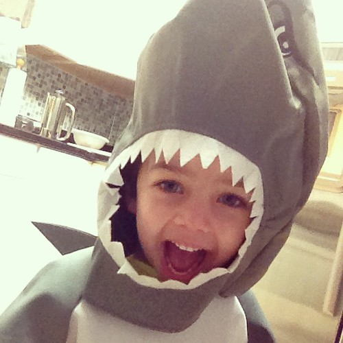 My little shark