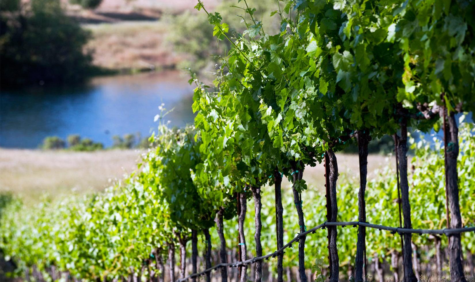 Jordan Healdsburg Wine Tasting Best Sonoma Wineries