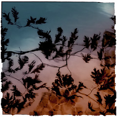 Autumn Oak Reflections Kaleidoscoped ©