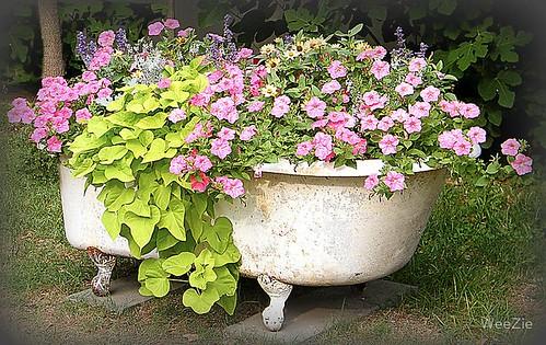 Flower Garden in a Bathtub
