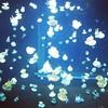 Ballet. Jellyfish. #Vancouver Aquarium #heyho2014