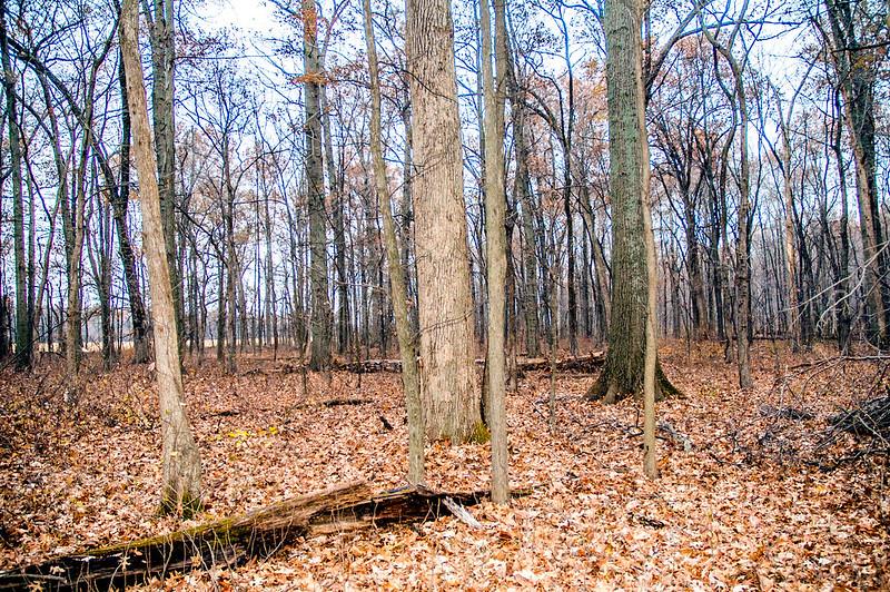 Saunders Woods Nature Preserve