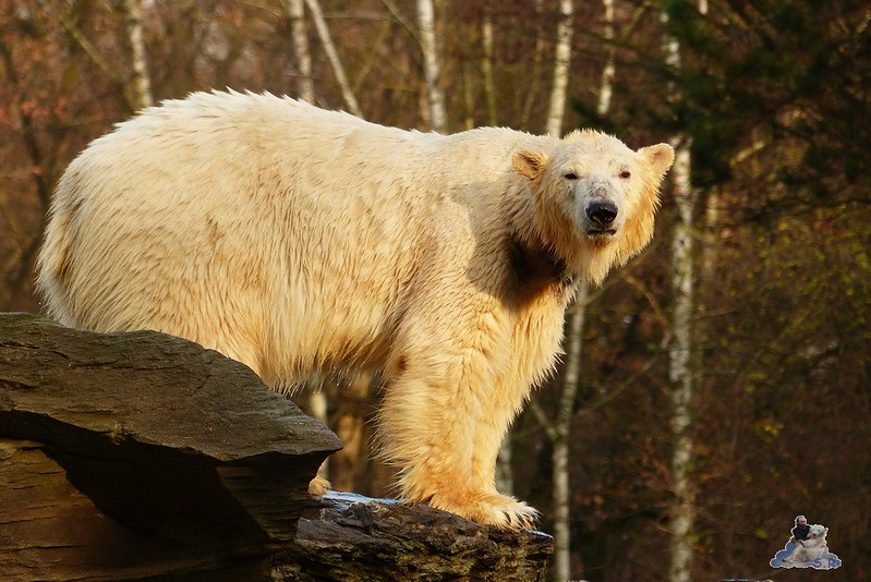 Tierpark Berlin 06.12.2014 196