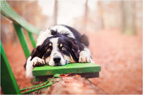Kjara Kocbek Animal Photography - Page 2 15806807935_6af2300369