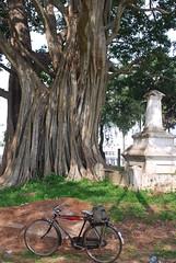 Sri Lanka, Anuradhapura