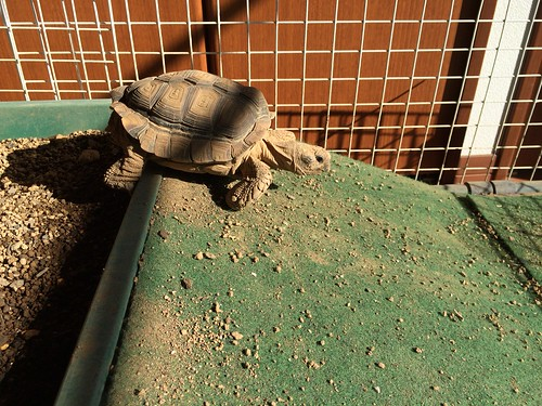 産卵後の日光浴
