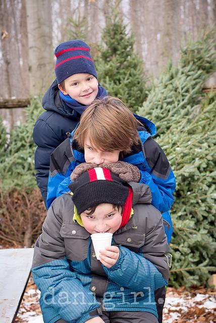 Christmas tree quest 2014-9