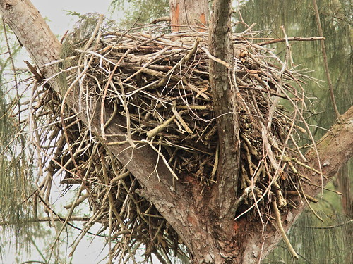 Bald Eagle nest empty 20150101