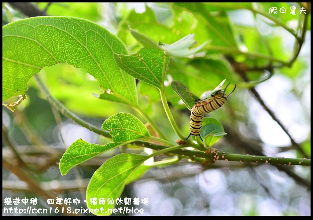 樂遊中埔─四季好咖‧獨角仙休閒農場DSC_3880