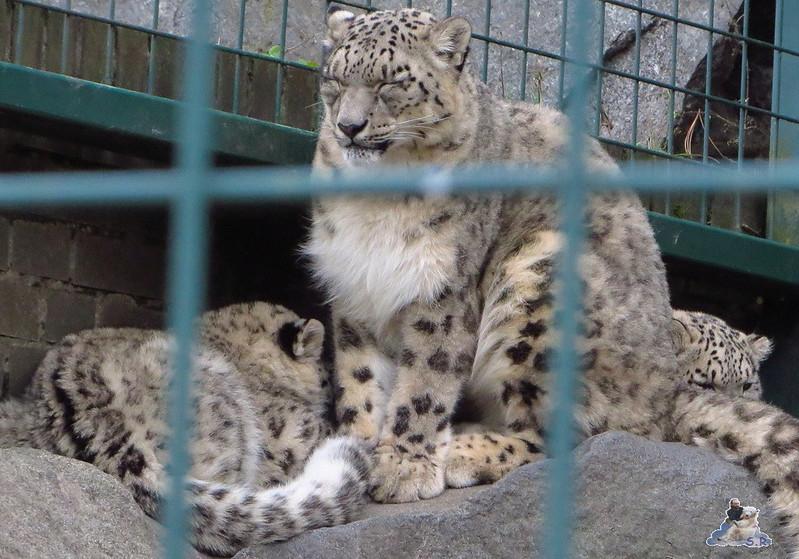 X Tierpark Berlin Eisbären 20.12.2014 51