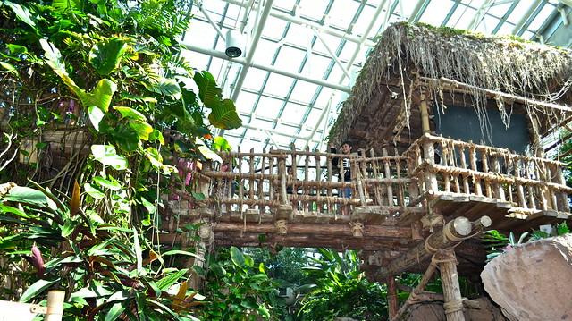 audubon aquarium of the americas - amazon exhibit