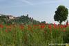2016-05-07-papaveri a castello 2 bis-2337