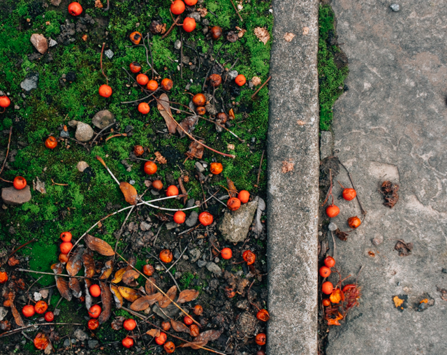 orange-red berries