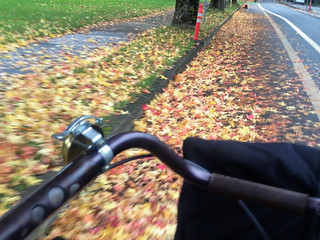 Leaves in bike lanes-1