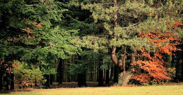 Le foreste del Pratomagno a Monte Lori