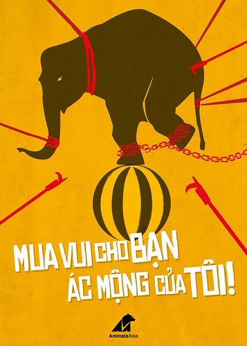 The winning image - chained elephant (by Duong Doan Anh Minh)
