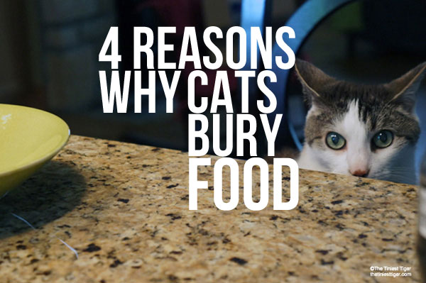 Why Do Cats Bury Their Food