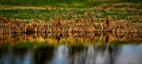 Pond Shore / Teichufer