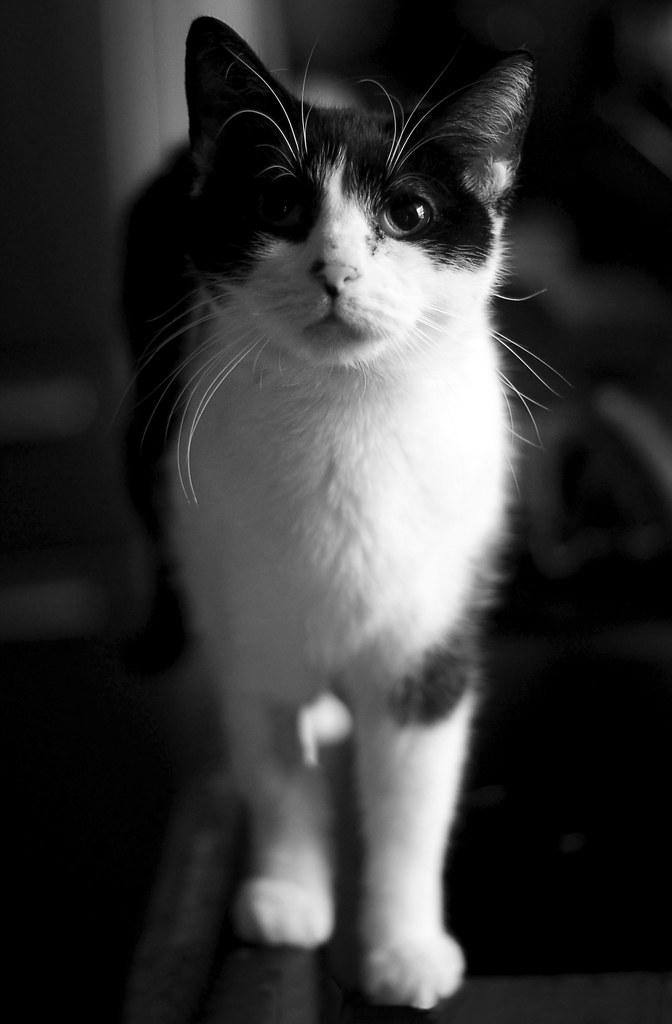 Meet Oona