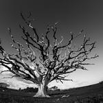 Fisheye tree
