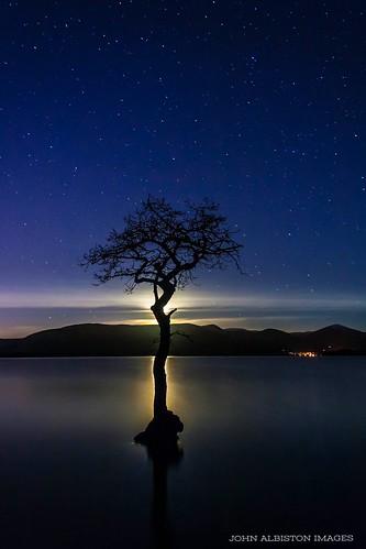 sky tree night bay nocturnal lone loch lomond starry millarochy