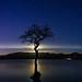 Lone Tree & Moonshine, Millarochy by john&mairi