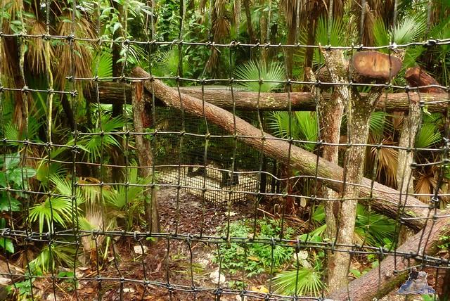 Belize Zoo 19.11.2014 105