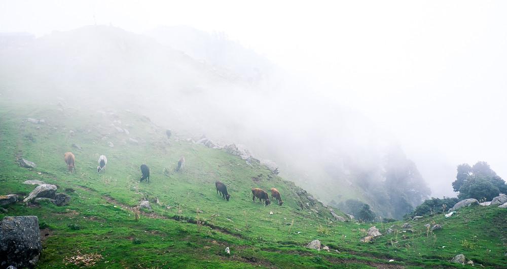 Mountaintop Pastures