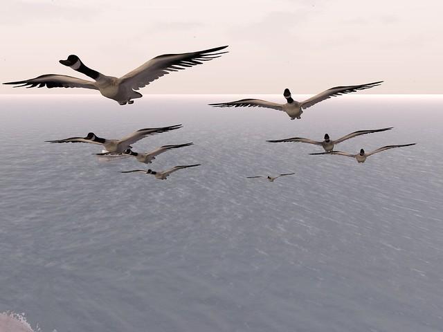 Frisland - Canada Goose Formation II