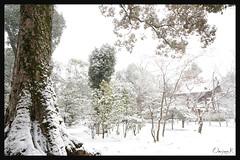 日本京都-金閣寺-雪.17