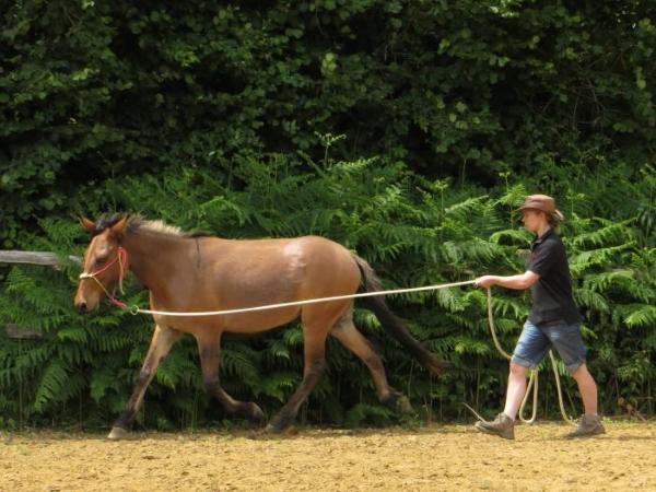 Shiny mule