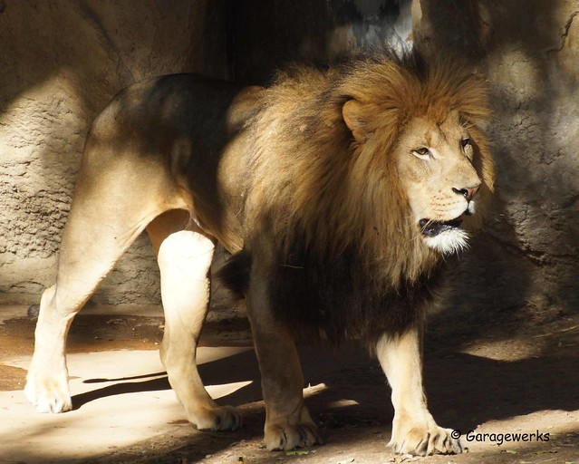 St Louis Zoo 2014