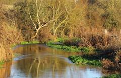 Landscape - Berkshire
