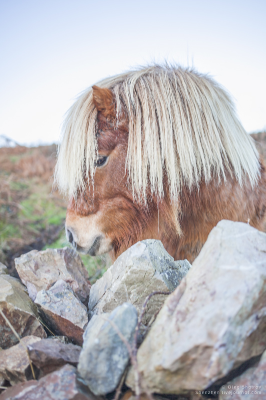 Pony at Howth, Dublin, Ireland