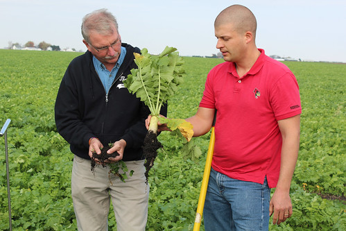 USDA employees, Paul Youngstrum and Eric McTaggart, examine a cover crop radish. NRCS photo by Jody Christiansen.