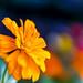 Flowers in Park by Photon-Huntsman