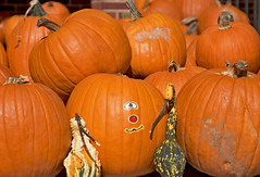 Pumpkins -- Arlington United Methodist Church Arlingotn Boulevard Arlington (VA) October 2016