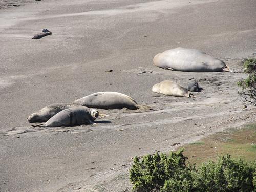 La Peninsula de Valdés: des éléphants de mer