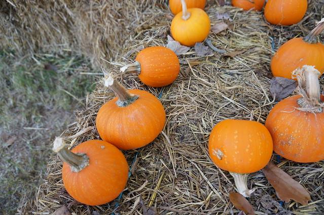 Halloween 2014 1851