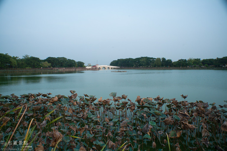 台南私藏景點-新營天鵝湖 (8)