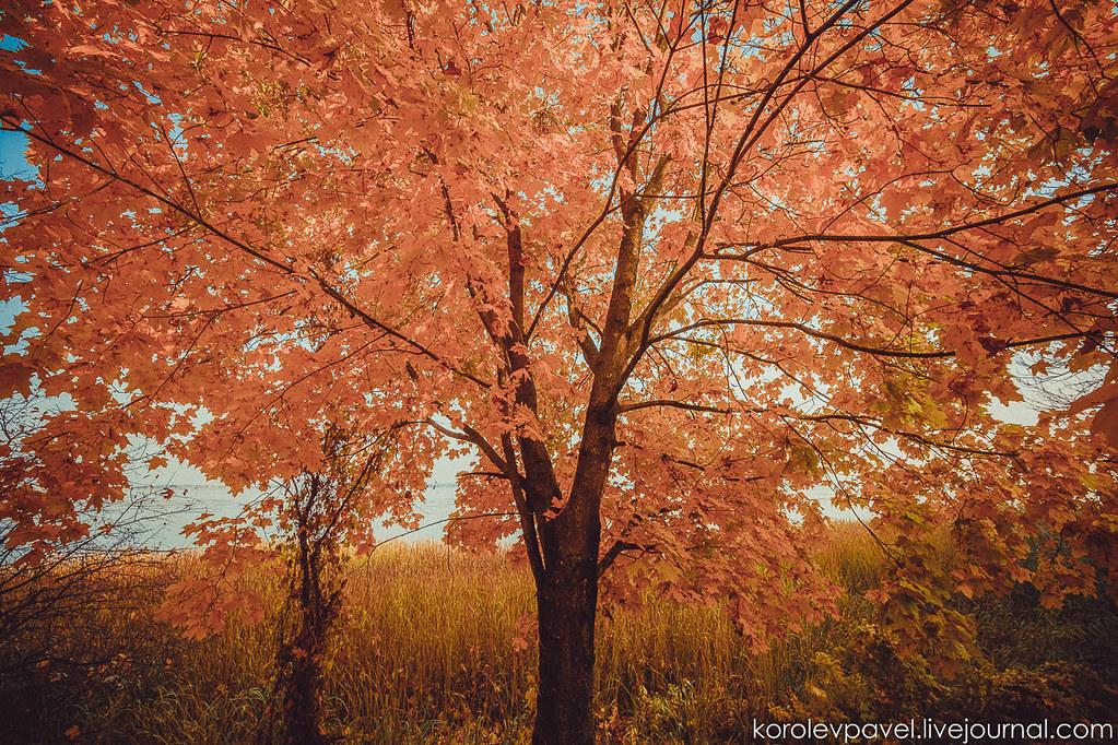 Autumn-271