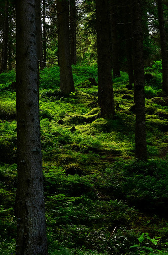 Lights And Shadows In The Wood