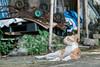 Street Cats :: Cha Kwo Ling (茶果嶺), Hong Kong