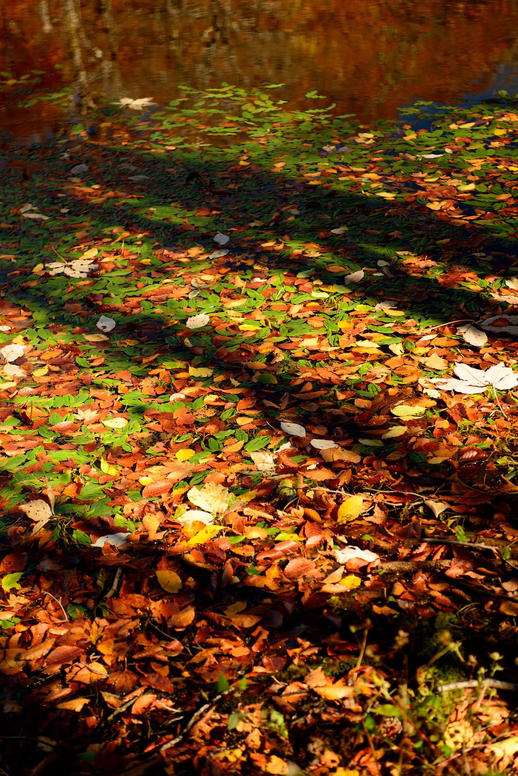 福井 刈込池で秋を撮る。