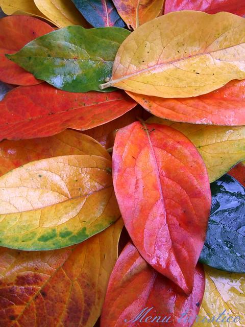 vassoio di foglie autunnali