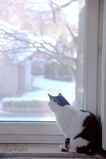 cat winter window snow view street outside inside indoor outdoor upstairs