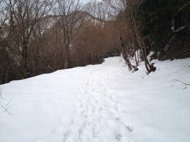 養老山・笙ヶ岳 登山道 林道